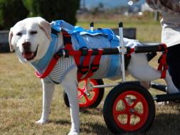 大型犬用車椅子イメージ