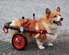 中型犬用車椅子イメージ