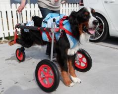 特殊仕様車椅子イメージ