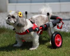 小型犬用車椅子イメージ