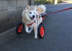 中型犬 東京都