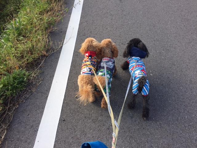 トイプードルの桃太郎ちゃん・ヨークシャテリアのようちゃん・コーギーのゴンちゃんの犬用車椅子♪