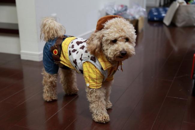 豆柴犬 きなこちゃん&コーギー犬 ももちゃんの犬用車椅子♪