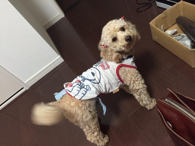 千葉県の大型犬 ターボちゃんの犬用車椅子♪