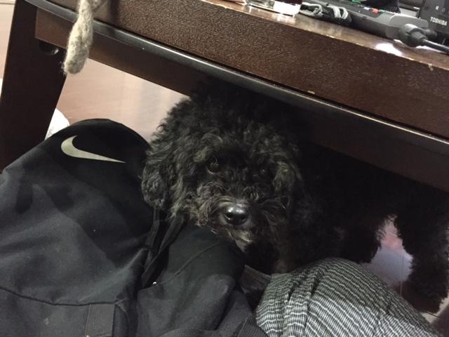 コーギー犬 クックちゃん&大型犬 はるこちゃん&コーギー犬 のぞみちゃん&四国犬 流ノ介ちゃんの犬用車椅子♪