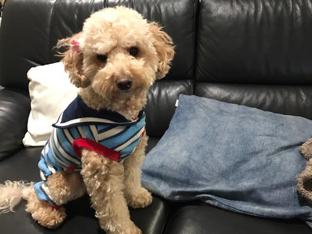 ミックス犬 ボスちゃん&ミックス犬 ちゃちゃちゃんの犬用車椅子♪