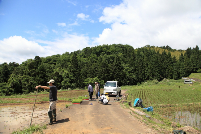 福井県高浜町の棚田へ田植えに行ってきました♪