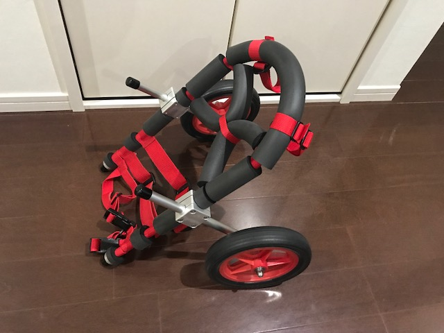 ジャックラッセルテリア リオンちゃんの犬用車椅子