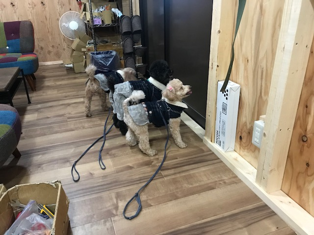 シェルティー ディオちゃん&コーギー 史ちゃん&ミニチュアダックスフンド ルーファちゃんの犬用車椅子