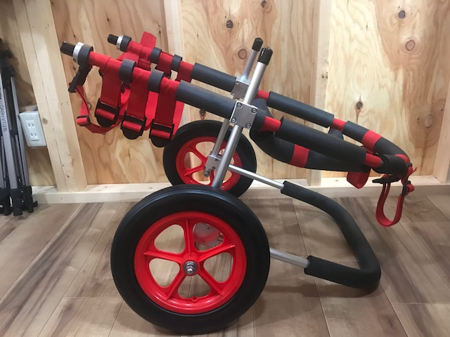 静岡県のオーストラリアンケルピーのミックス犬 ヤマトちゃんの犬の車椅子