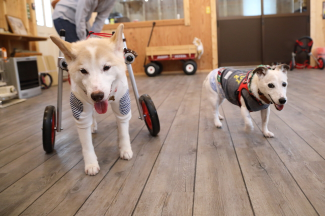 大阪府より中型犬、ポチちゃんがいらっしゃいました
