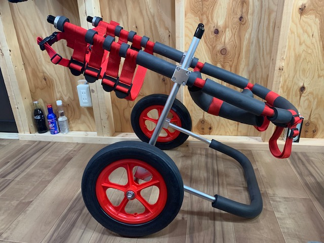 愛知県のフラットコーテッドレトリーバー ノワールちゃんの犬の車椅子
