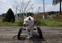 大型犬 神奈川県