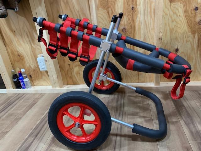 静岡県のシベリアンハスキー ラッキーちゃんの犬の車椅子