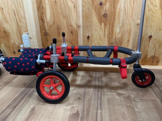 埼玉県のコーギー まるちゃんの三輪車椅子