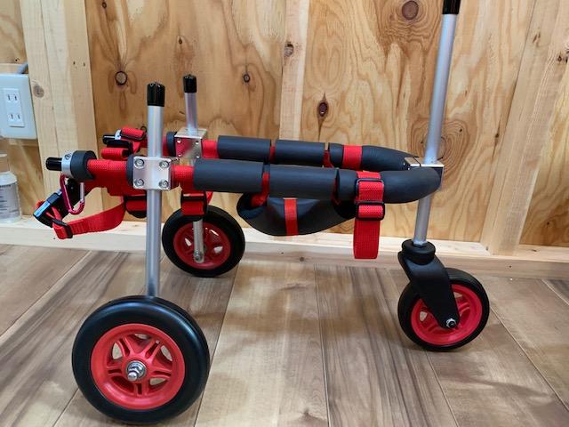 東京都のパピヨン&チワワのミックス犬 フラッカーちゃんの犬の車椅子