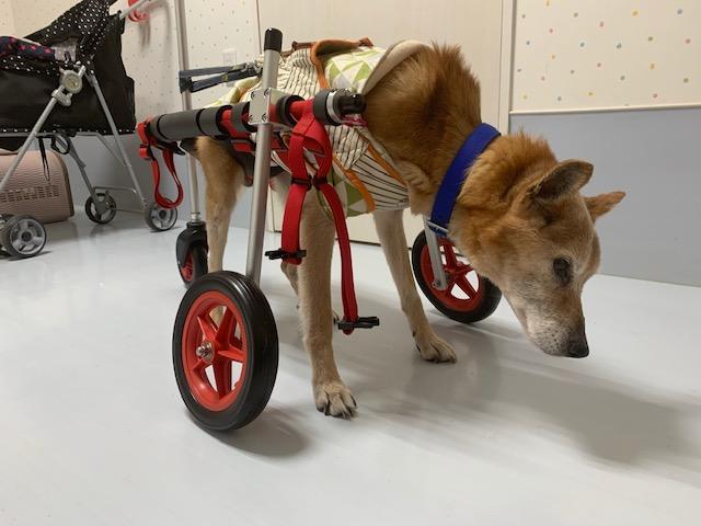 京都の老犬介護ホーム ろうたす様に、お伺いさせて頂きました。