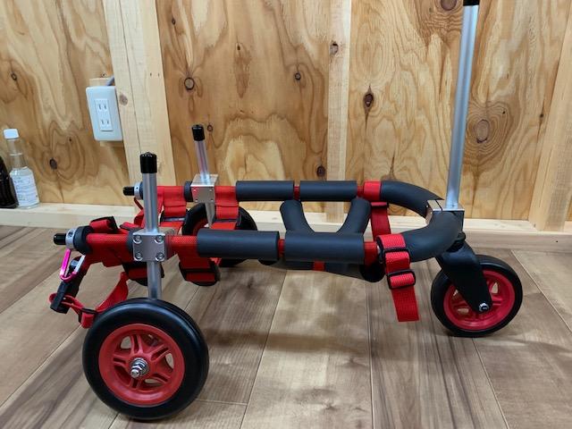 神奈川県のミニチュアダックスフンド モアナちゃんの犬の車椅子