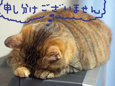福岡県のパピヨン マイキーちゃんの犬の車椅子