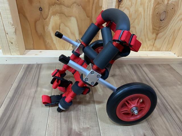 岡山県のチワワ じゅりちゃんの犬の車椅子