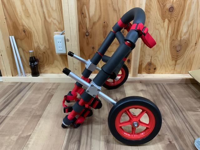 茨城県のキャバリア ハロウィンちゃんの犬の車椅子