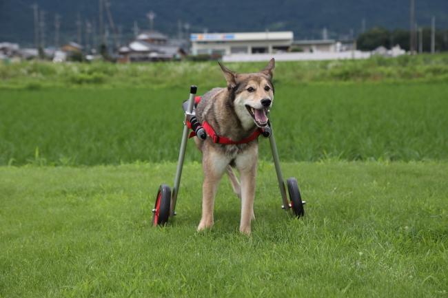 愛知県のミックス犬 ジョン君がいらっしゃいました。