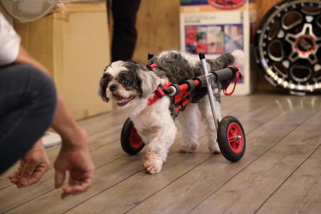 マロちゃんの犬の車椅子