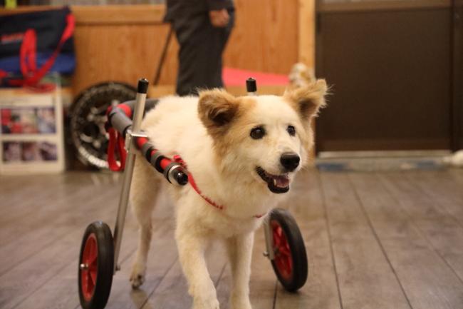 兵庫県の中型犬 ムクちゃんがいらっしゃいました。