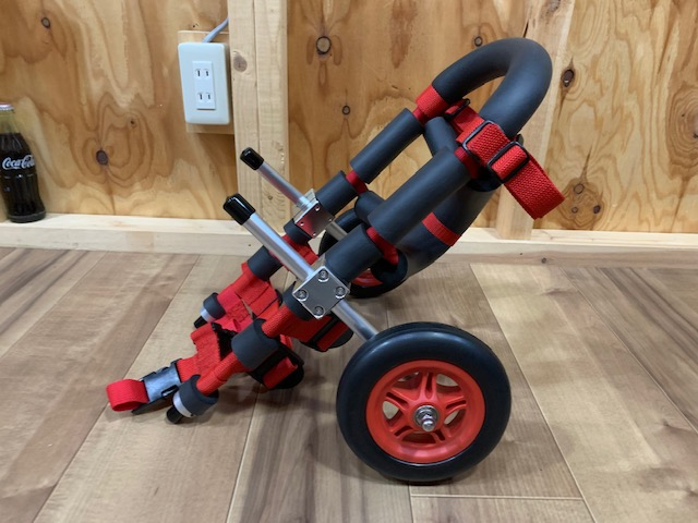 埼玉県のミニチュアダックスフンド イヴちゃんの犬の車椅子