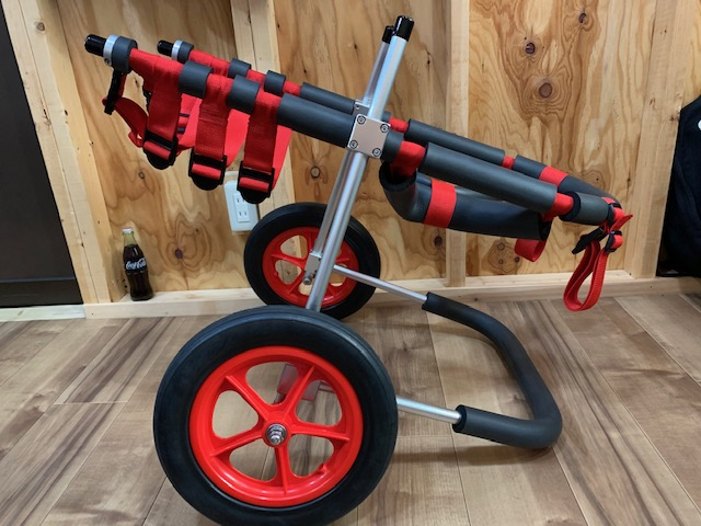 東京都のラブラドールレトリーバー レイちゃんの犬の車椅子