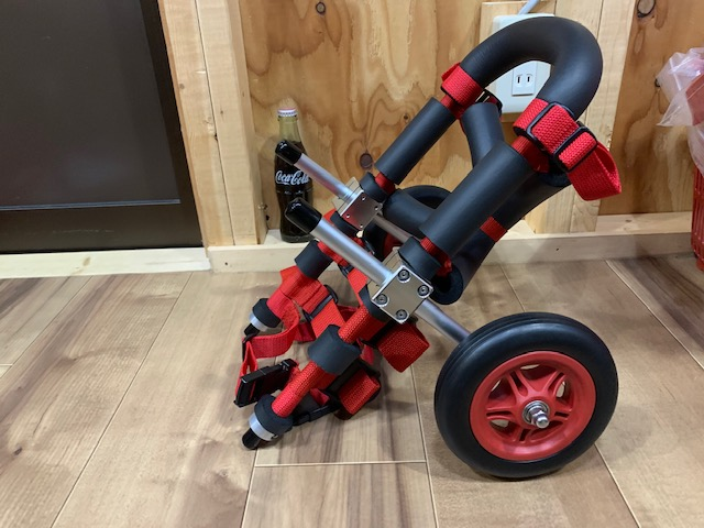 神奈川県のミニチュアダックスフンド コバウちゃんの犬の車椅子