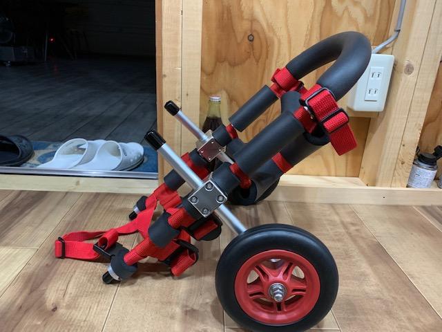 千葉県のミニチュアダックスフンド フクちゃんの犬の車椅子