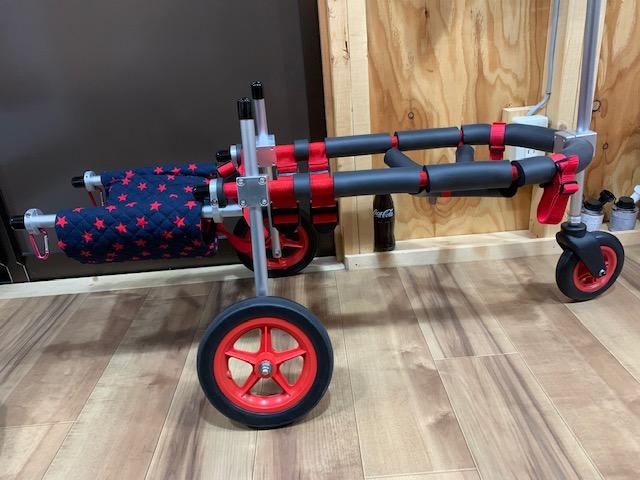 静岡県のビーグルとシェパードのミックス犬 コロちゃんの犬の車椅子