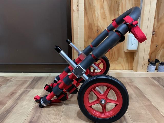 滋賀県のコーギー犬 クーちゃんの犬の車椅子