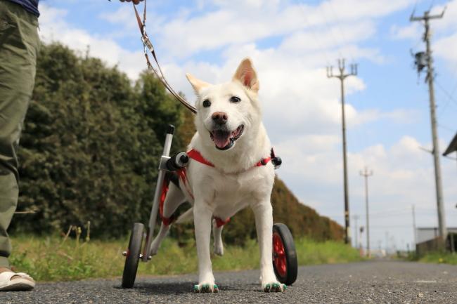 三重県の中型犬 ユキちゃんがいらっしゃいました。