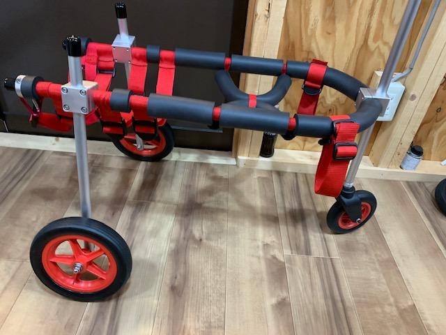 長野県の甲斐犬 全(マットウ)ちゃんの犬の車椅子