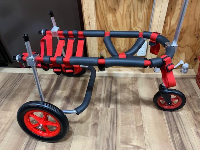 京都府のラブラドールレトリーバー ジョアンちゃんの犬の車椅子