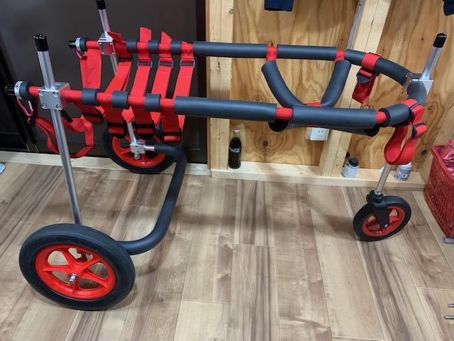 埼玉県のレオンベルガー RISEちゃんの犬の車椅子