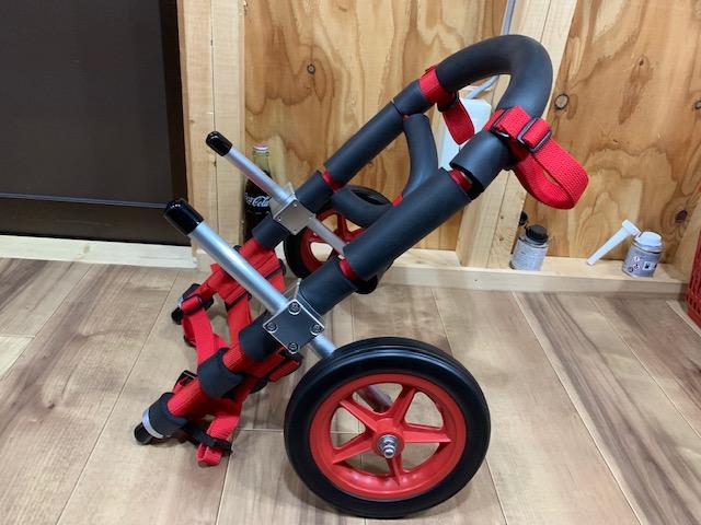 山梨県のコーギー メイちゃんの犬の車椅子