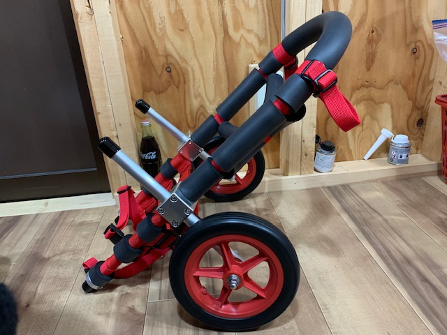 岡山県のコーギー ルルちゃんの犬の車椅子