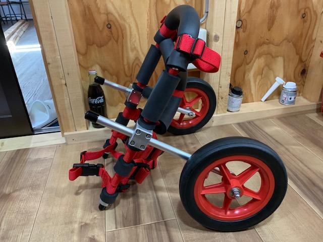 京都府のミニチュアシュナウザー くぅちゃんの犬の車椅子