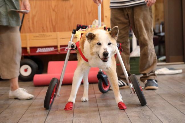 富山県の中型犬 ごまちゃんがいらっしゃいました。