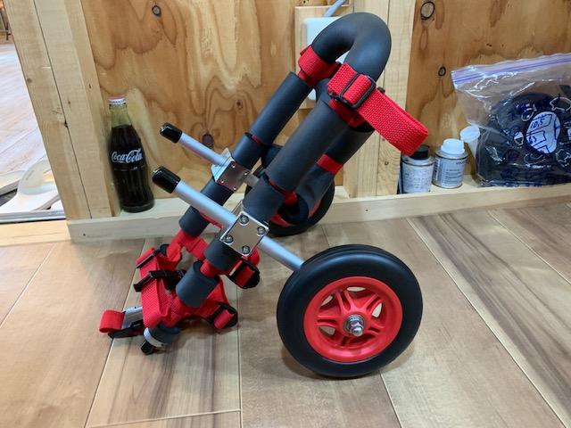 群馬県のミニチュアダックスフンド ピクシーちゃんの犬の車椅子
