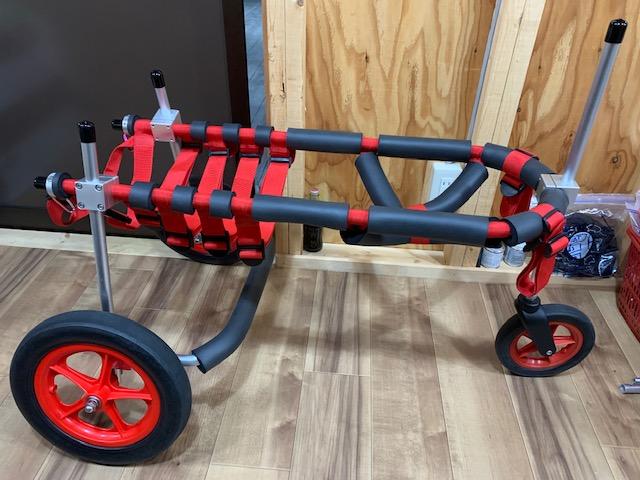 大阪府のラブラドールレトリーバー ベガちゃんの犬の車椅子