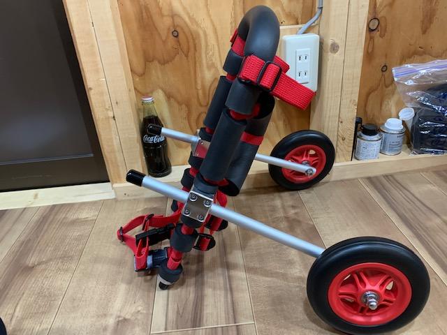 宮崎県のトイプードル クレアちゃんの犬の車椅子