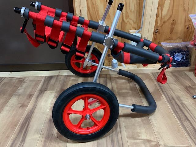 福岡県のゴールデンレトリーバー 小十郎ちゃんの犬の車椅子