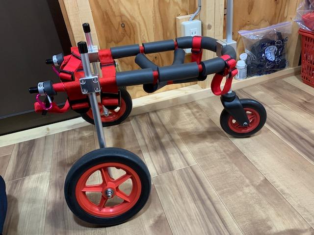 山梨県の柴犬 健太ちゃんの犬の車椅子