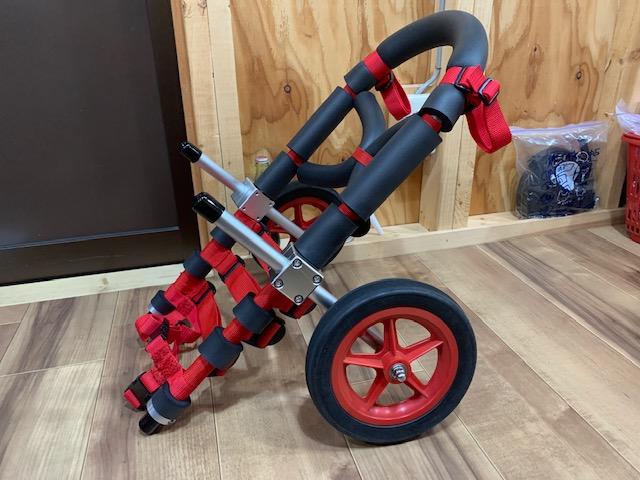 沖縄県のコーギー ラブちゃんの犬の車椅子