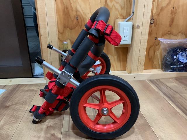 福岡県のジャックラッセルテリア コロンちゃんの犬の車椅子