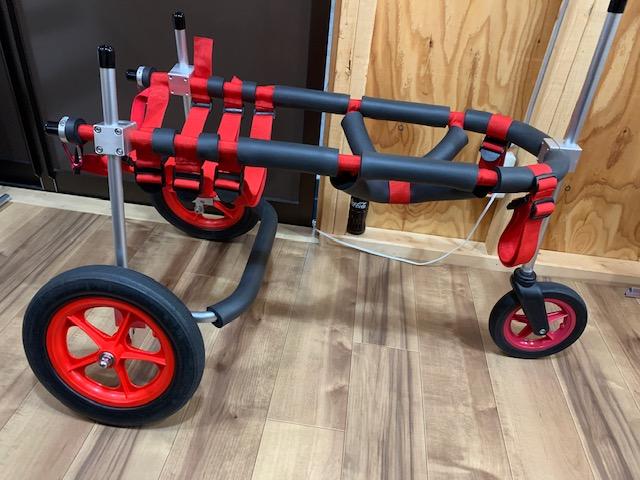茨城県のラブラドールレトリーバー エイトちゃんの犬の車椅子